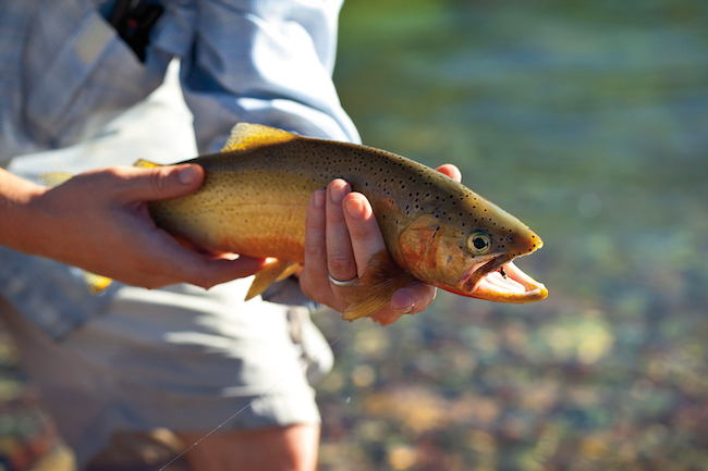 fly fishing Resort at Paws Up